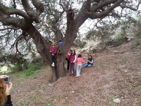 02_Lo más pequeños sobre el tronco de una encina centenaría junto a las Casas del Nene