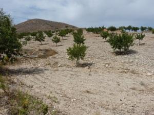 Parada 12_Ocupación del suelo_Zona agraria del Campo de Cartagena