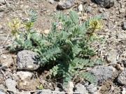 Parada 4_Hábitat del Garbancillo de Tallante_Astragalus nitidiflorus