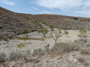 Parada 5_Agricultura de subsistencia tradicional de secano