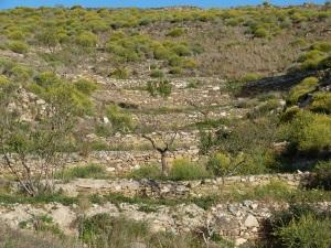 Parada 8_Piedra en seco_Construcciones de pedrizas para abancalamientos