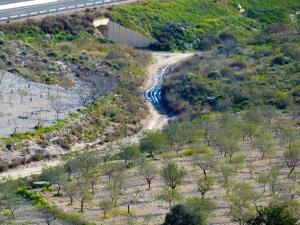 Parada 9_Ecosistemas de Rambla_Rambla de Las Casas Nuevas