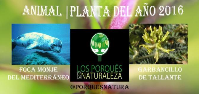 Garbancillo de Tallante, elegido como Planta del Año 2016