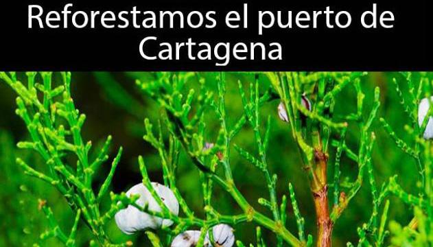 Reforestación en Galeras