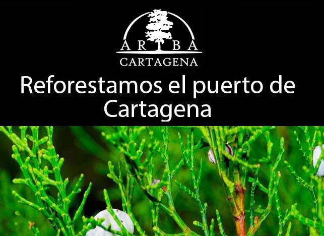 Reforestación con Tetraclinis articulata