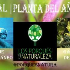 PlantaAño2016